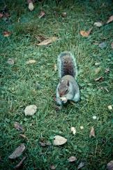 Hyde Park - Squirrel Food