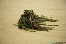 Sea Weed Tenticles