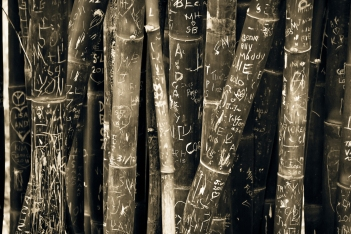 Black and White Bamboo Writing