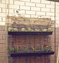 Vertical Gutter Garden DIY Black