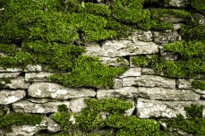 Stone Fence - Cotswolds